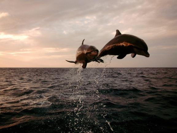 dolphin-club-navionic-ru-19.jpg