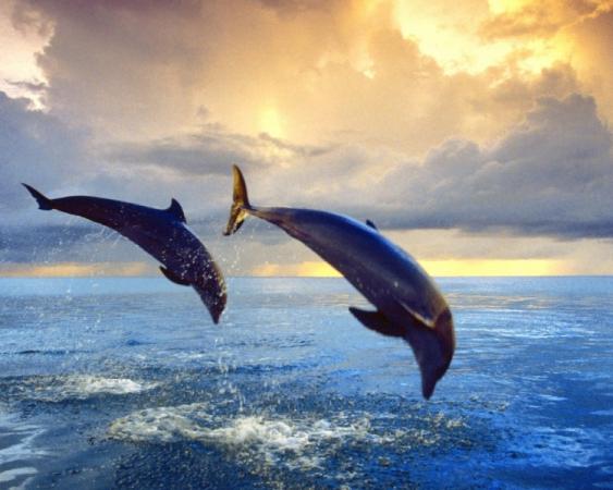 dolphin-club-navionic-ru-5.jpg