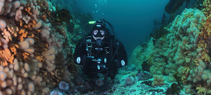 """Дайвинг клуб """"Навионик"""". Обучение подводному плаванию в Нижнем Новгороде. Дайвинг в Норвегии."""